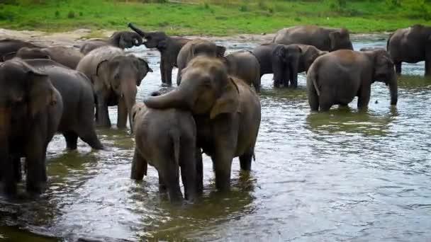 Herde indischer Elefanten tagsüber im Wasserloch, kühlt ihren Körper und trinkt Wasser
