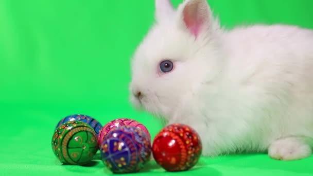 Kis nyúl húsvéti színű tojások elszigetelt zöld háttér