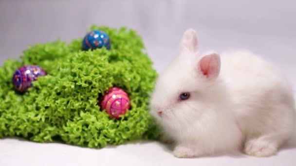 weißer Hase auf weißem Hintergrund mit Ostereiern