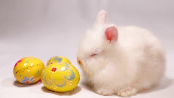 kis nyúl húsvéti tojás fehér háttér.