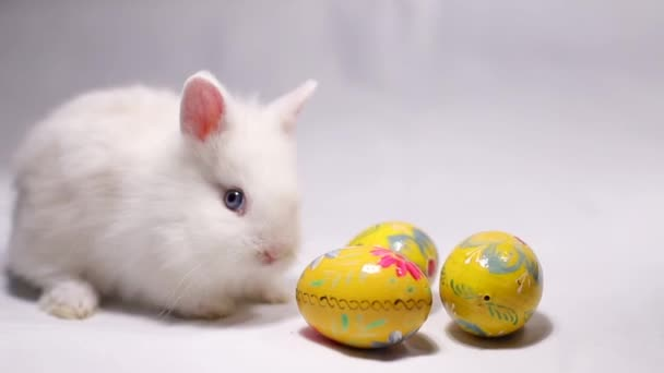 White hare with Easter eggs. Easter symbols