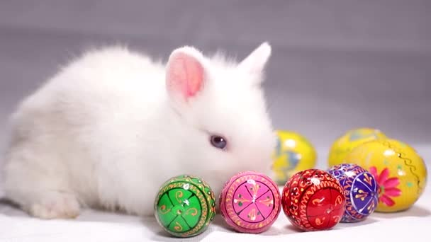 little rabbit with Easter colored eggs