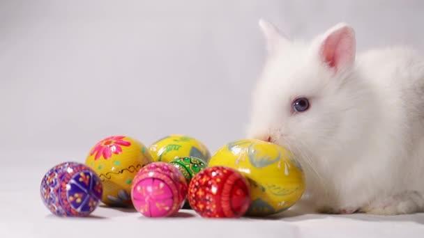 Húsvét fehér nyúl fehér háttér
