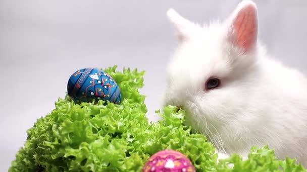 fehér nyúl a füvön húsvéti tojással