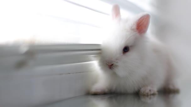 Ein weißes Kaninchen sitzt auf der Fensterbank.