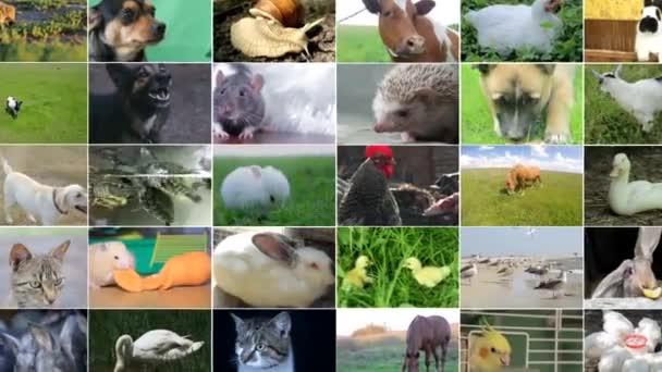 Sok videó felvételek a különböző állatok és madarak, Full HD kollázs