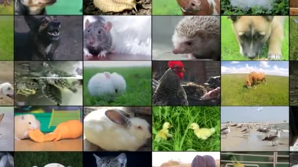 Many video footage of various animals and birds, Full HD collage