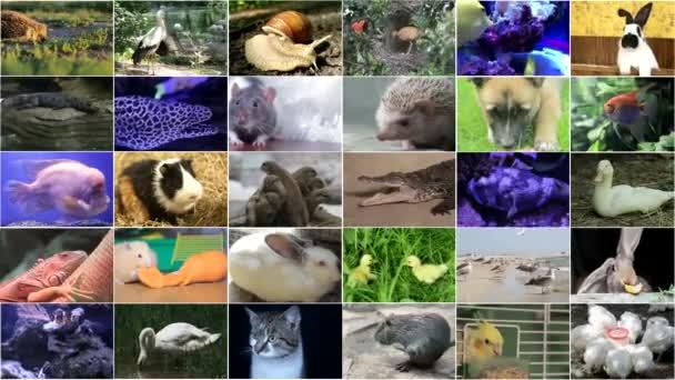 Mnoho videozáznamů různých zvířat a ptáků, Full HD koláž