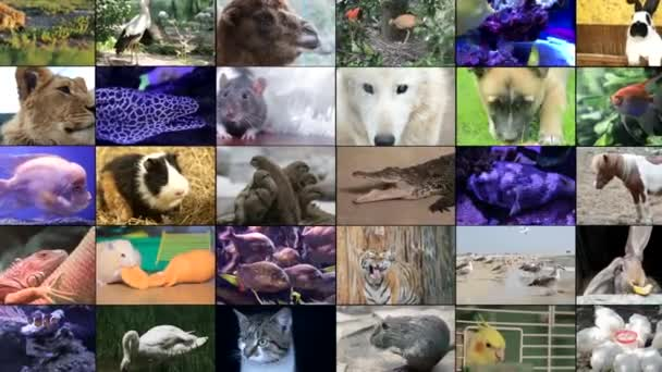 Video střih volně žijících živočichů, mnoho videí různých zvířat a ptáků, Full HD koláž