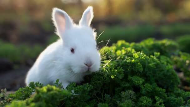 Kaninchen auf grünem Gras, weißes Kaninchen, weißes Kaninchen