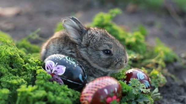 Osterhase. Osterferienkonzept. Nettes Kaninchen auf grünem Gras neben bemalten Eiern. Charmantes Kaninchenbaby. Frühlings- und Osterdekorationen. Niedliche flauschige Kaninchen und bemalte Eier.