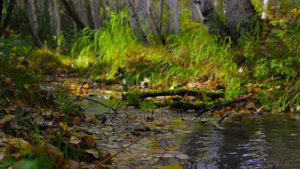 Kadidlo kouří na proud tekoucí přes slunné podzimní les. Ostření