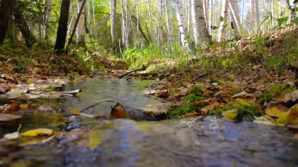 Potok protéká slunečný podzimní březový les. Ostření