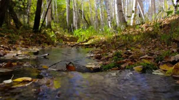 Potok protéká slunečný podzimní březový les. Klid, pohoda, harmonie