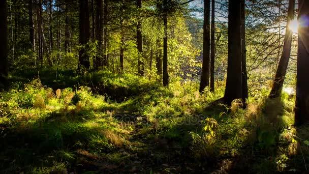 Gyönyörű naplemente az erdőben. Idő telik el. Fényes napsugarak, az erdőben