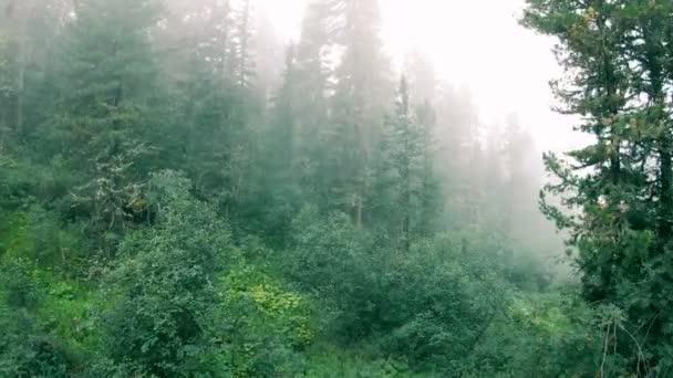Záhadný les zarostlý mechy a bílou mlhou