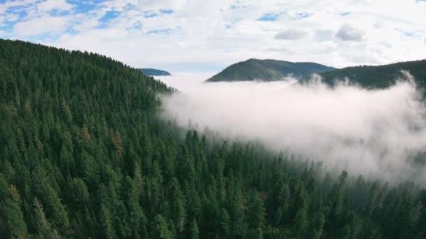 Létání v horách nad mlžným sibiřským lesem