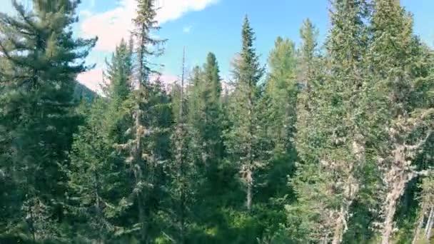 Dron vzlétající nad stromy v lese