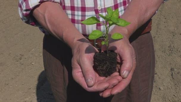 Mladých rostlin v rukou farmář, sazenice ekologie růst symbolu