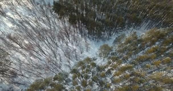 Vzdušný top na zimní les
