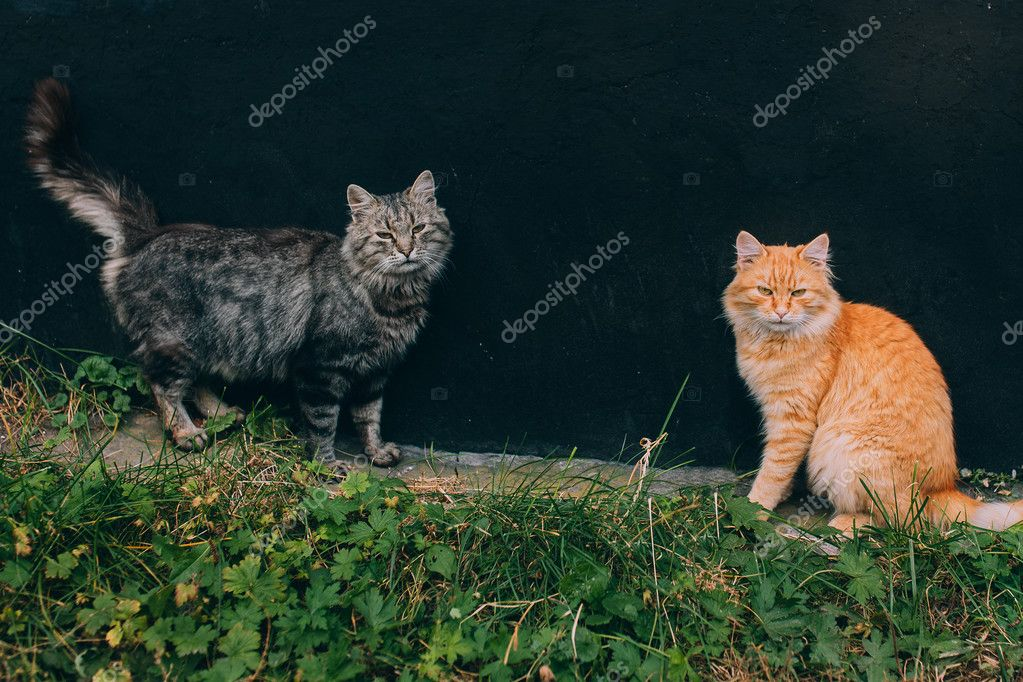 beautiful Cats in park