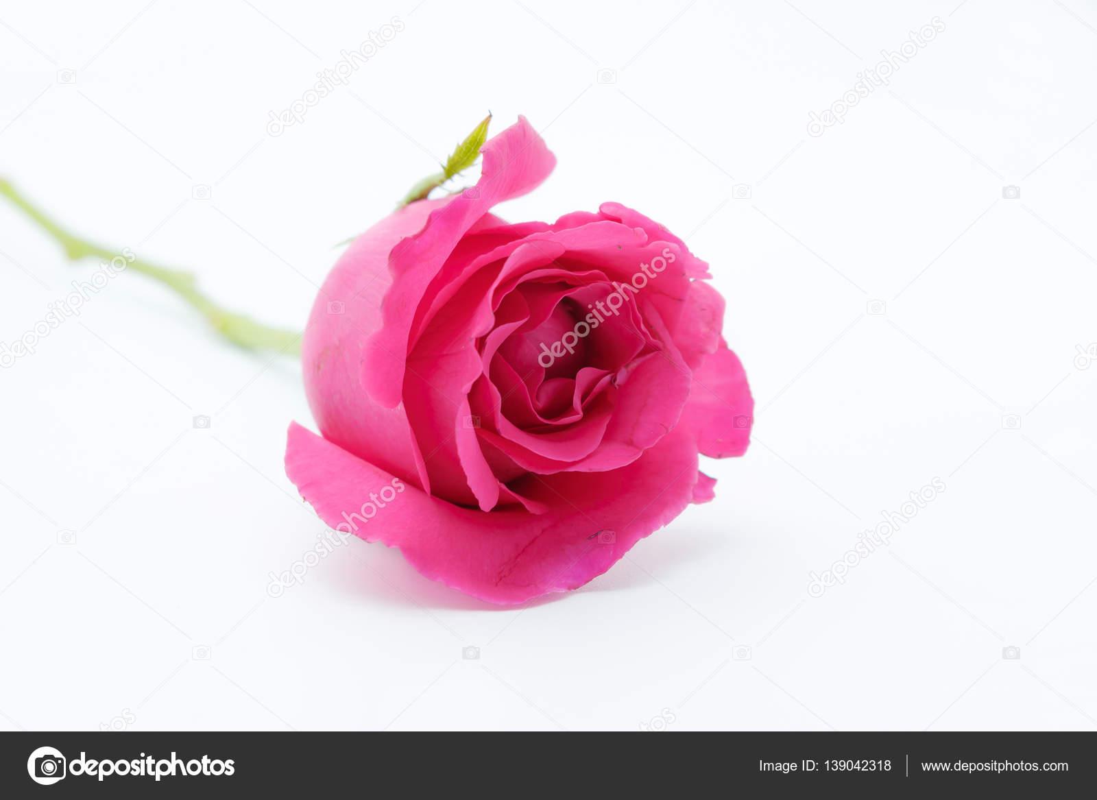 Fleur D Amour Photographie Winyoophoto C 139042318