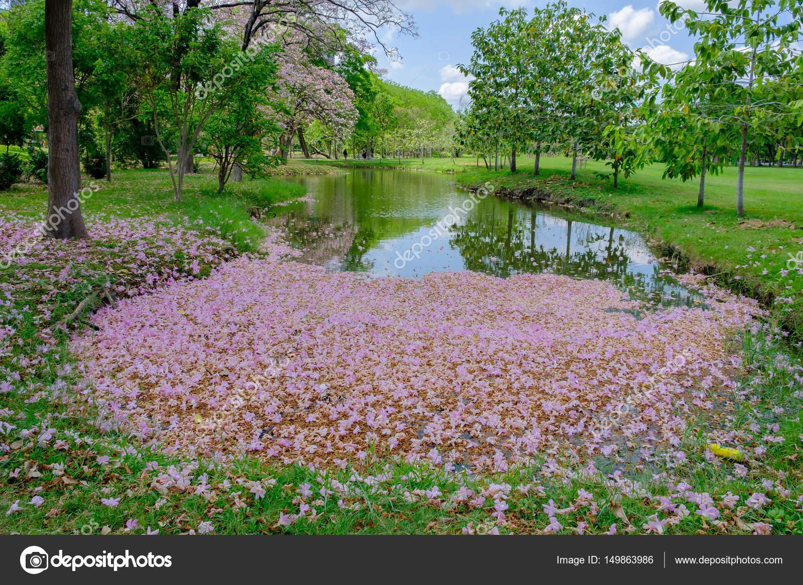 Болото фото с цветами