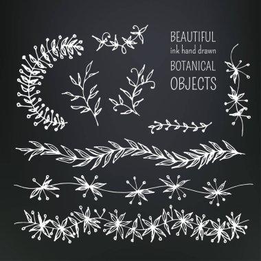 botanical objects set