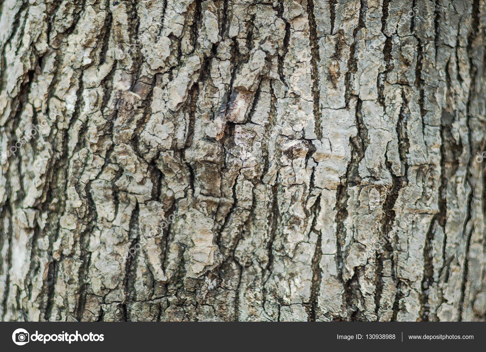 texture d arri re plan d un tronc d arbre photographie. Black Bedroom Furniture Sets. Home Design Ideas