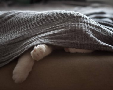 The cat sleeps on the couch, hiding under a gray blanket. Paws are visible from under the bedspread, the cat itself is almost invisible. Close-up