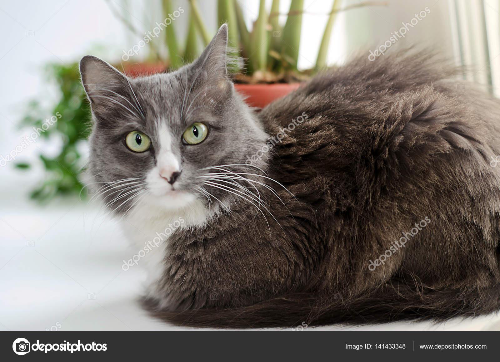 Černá kočka lesbička