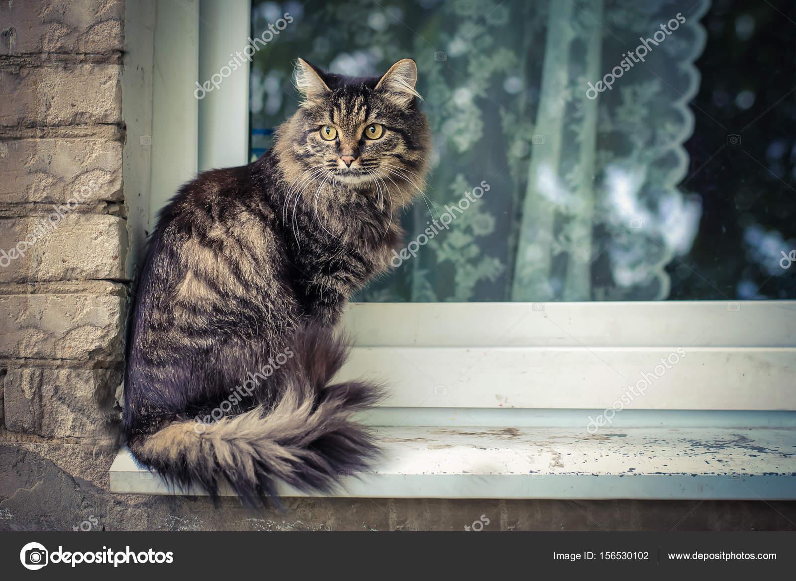 Velká stará kočička videa