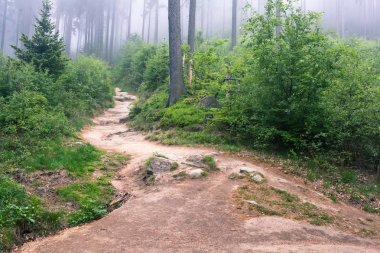 Foggy trail in mountain forest