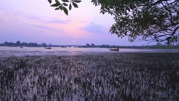 Mangrove Mocsár Sarasin híd közelében