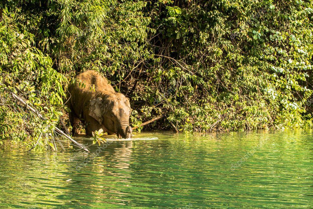 wild elephant name Khan Kluay