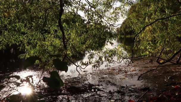 Na podzim klid Creek pobřeží s mnoha větvičkami  Sway listy na povrchu rybník