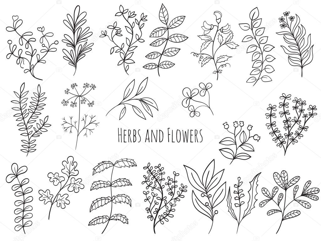 Set of flowers and herbs