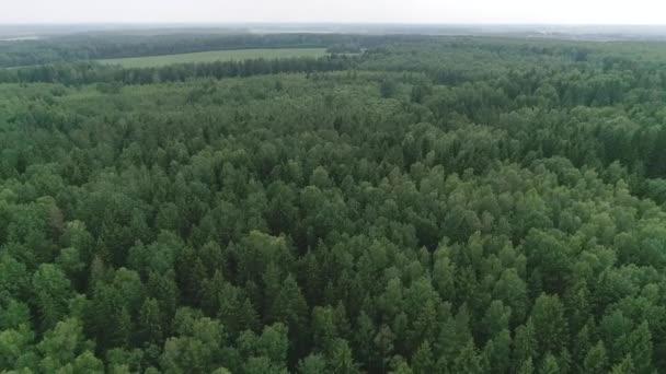 Drónrepülés az erdő felett