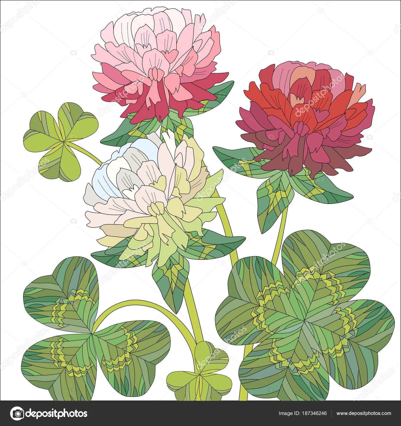 Fleurs De Trefle Rouge Et Blanc Avec Feuilles Image Vectorielle