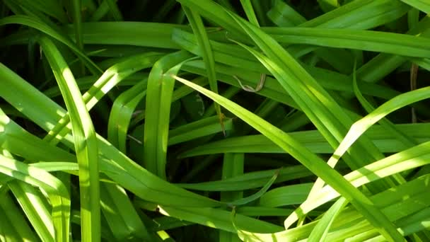 Green grass in sunny day. Natural background