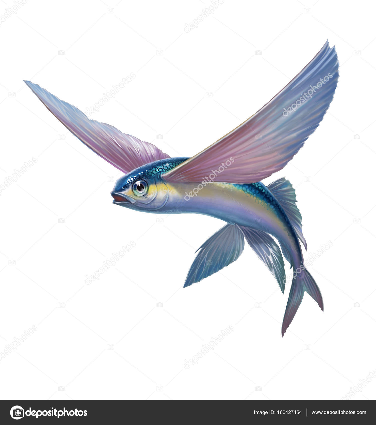 Flying fish on white stock photo for Where do flying fish live