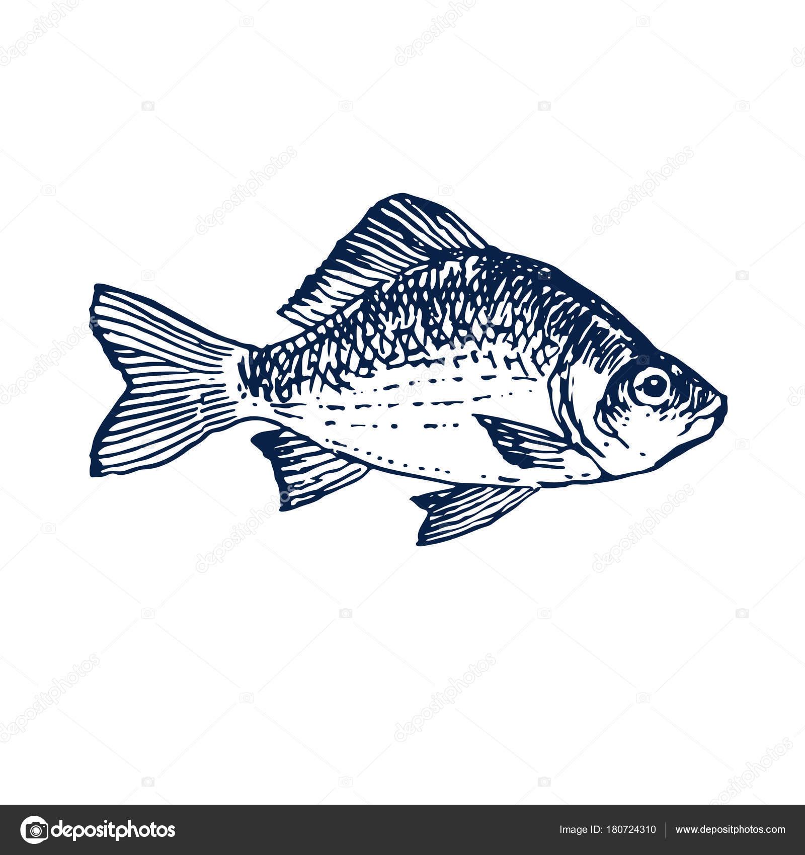 Tinte Handgezeichneten Meer Fische Abbildung Grundrissskizze Für ...