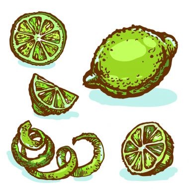 Citrus lime green collection set ink sketch hand drawn illustration isolated on white background