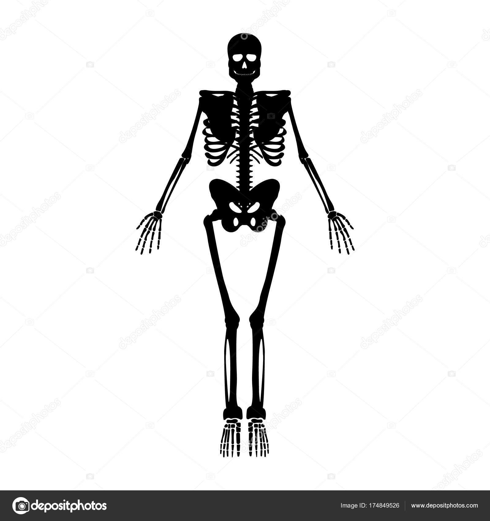 Skelett-Symbol. Menschliches Skelett Vorderseite Silhouette ...