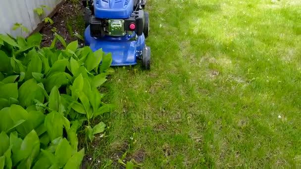 Sekání trávníku a konvalinky s žačky