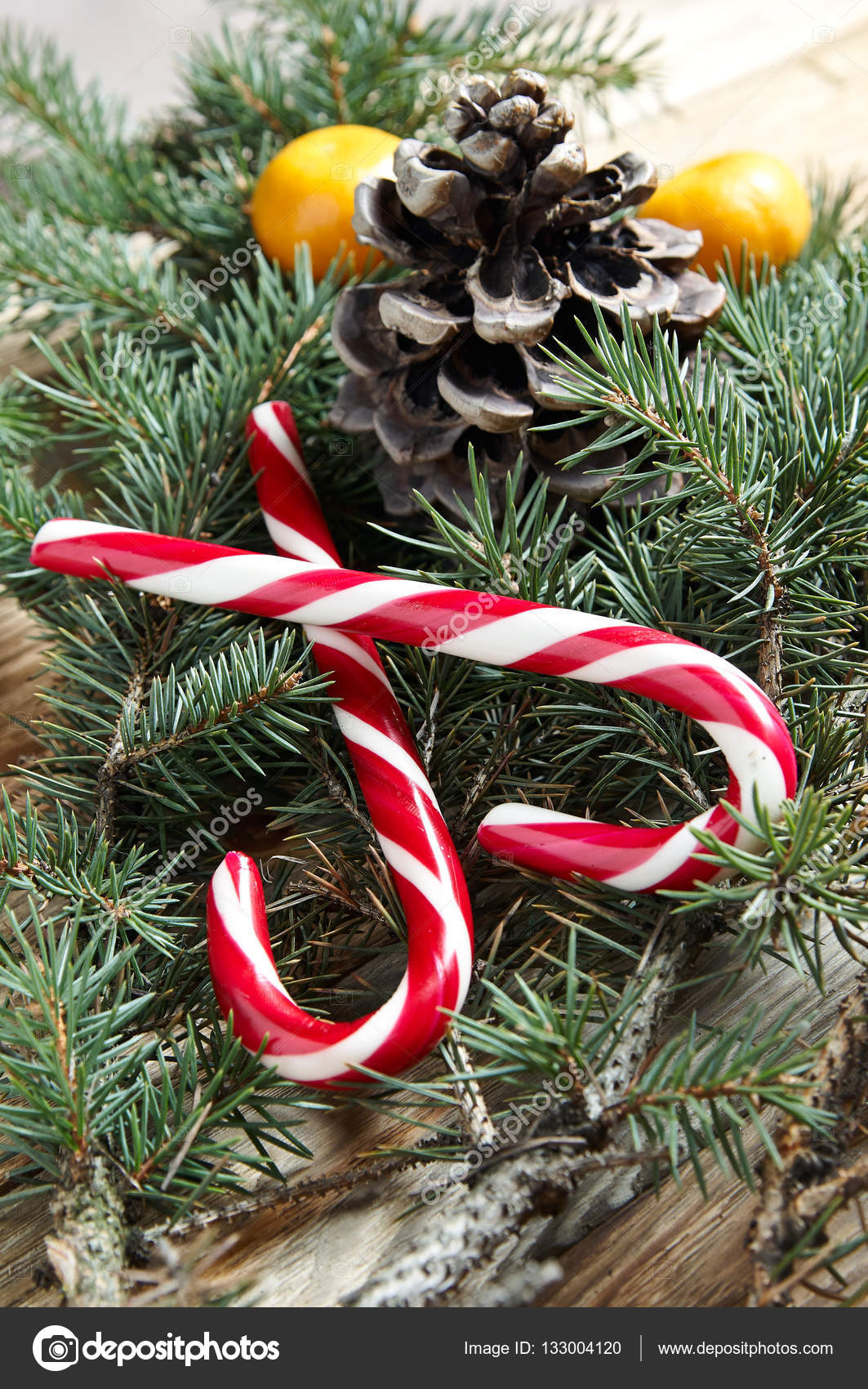 traditional christmas candy on spruce branch stock photo