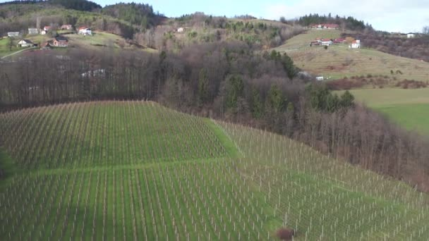 Vineyard in winter, early spring, aerial view on rows of grapevine, revealing bacward flying shot, a rural house at the end of the clip