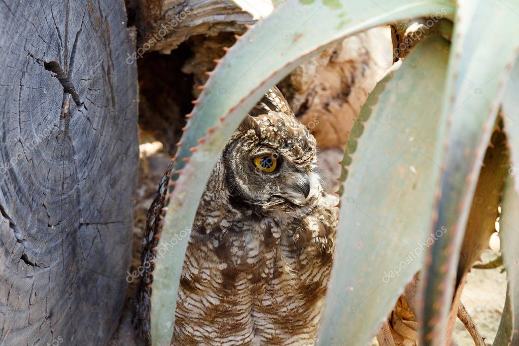 Owl hiding behind the plant