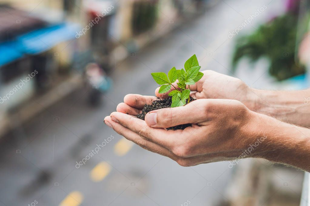 Hands holding young green plant, Against the background of the city. The concept of ecology, environmental protection