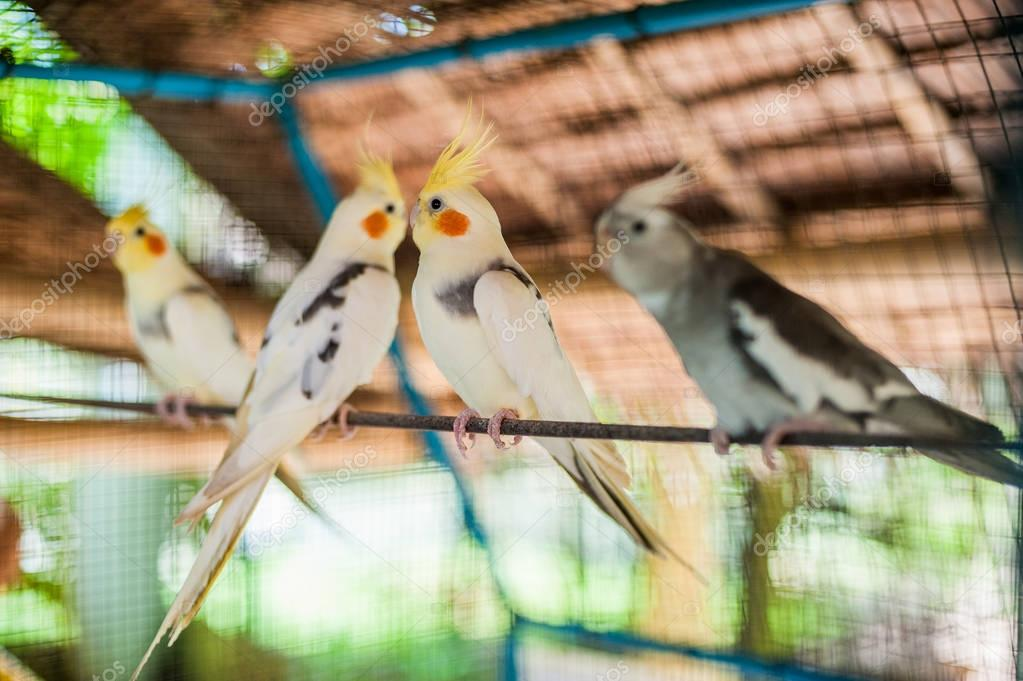Tropical birds in the Philippines